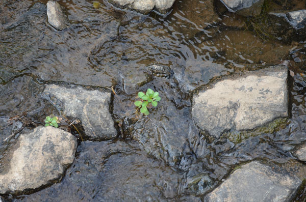 Finding a small plant growing from the river bed